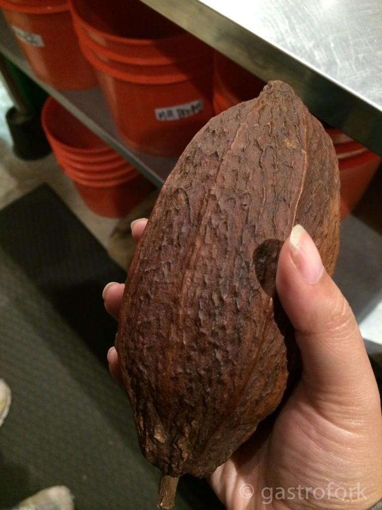 GFSF_dandelionchocolate-2611