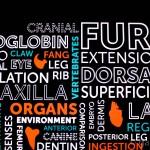 Animals Insideout Exhibition