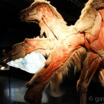 Animals Insideout Exhibition Camel
