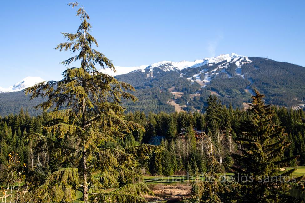 four seasons whistler bc