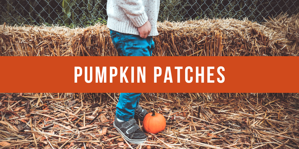 Pumpkin Patches in Vancouver