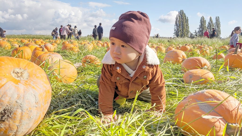 winston pumpkin patch